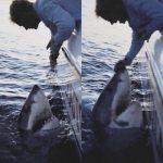 体重約1トンの ホホジロザメを釣った後、海へ帰す アメリカ サウスカロライナ州 2016年3月9日