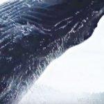 【恐怖】突然 目の前に飛び出す巨大クジラ カナダ ブリティッシュ・コロンビア州