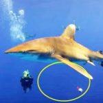 釣具が絡まったヨゴレザメ救出 バハマ