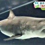 【動画】海のハンター展の内覧会の模様