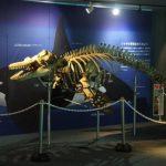 シャチの骨格標本など 「特別展示 シャチ」について 鴨川シーワールド