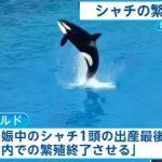 アメリカ 「シーワールド」 シャチの繁殖中止を発表 FNNより 2016年3月18日