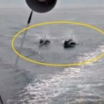 船と追いかけっこするシャチ 北海道 羅臼