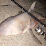 釣り人、オオメジロザメ1匹捕まえる 沖縄 サメ