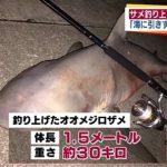 目撃相次いでいたサメ、沖縄の海岸で釣り上げられる 2016年10月28日遊泳再開