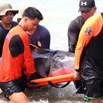クジラの子を救出 フィリピン