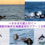 さかまた組と行く~釧路沖海洋生物調査同行ツアー1日間 2016年10月28・29・30日実施