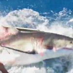 シャークケージにサメが入ってしまう事故発生