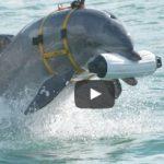 アメリカ海軍イルカ部隊の実態とロボット代替え計画