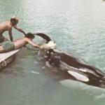 【衝撃映像】軍用シャチもいた! 海洋動物の軍事訓練の様子
