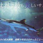 日本で唯一 ヨシキリザメの生体展示中 仙台うみの杜水族館 特別展