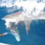 釣った魚をサメに奪われる オーストラリア