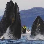 水中で撮影中、危うくクジラに呑み込まれそうになる ノルウェー