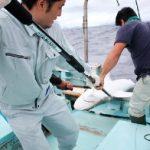 サメ駆除を観光資源に 沖縄 石垣市