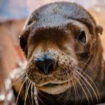 ロシア最大の水族館で、飼育動物の連続不審死の怪