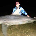 3mのオオメジロザメが川で釣れる オーストラリア
