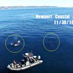 シャチの巨大な群れ出現 アメリカ