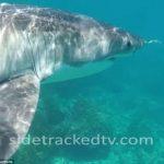 【恐怖】泳いでいたら すぐ目の前に ホホジロザメ オーストラリア